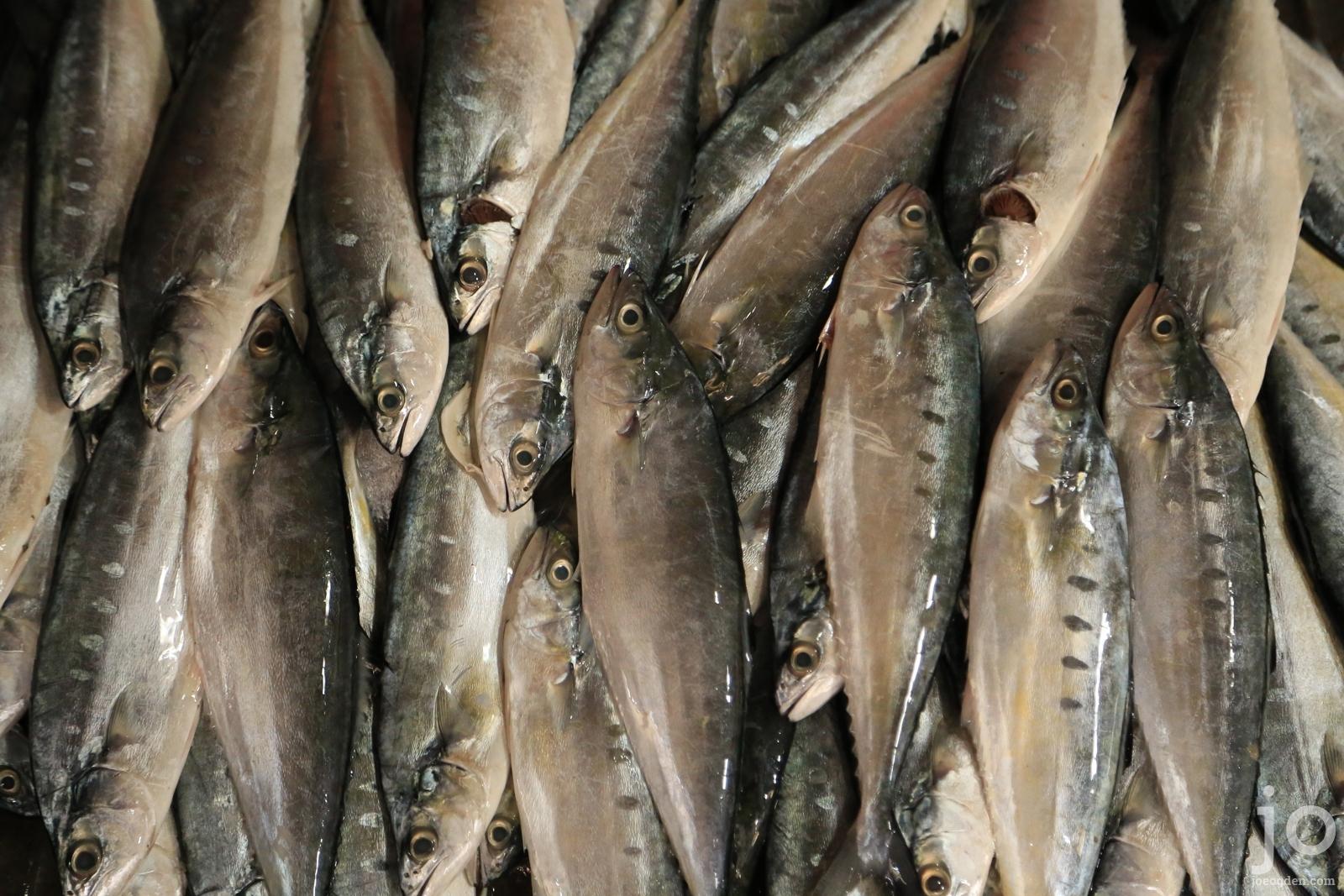 stock-photo-cambodia-fish-market-IMG_0376