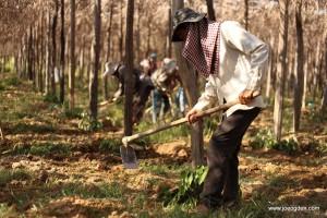 Pepper Planting at Starling Farm